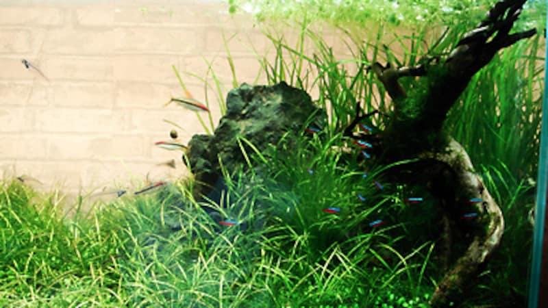 水槽別角度の写真2