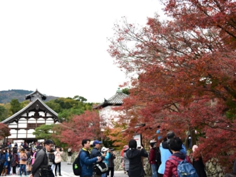 秋の天龍寺境内