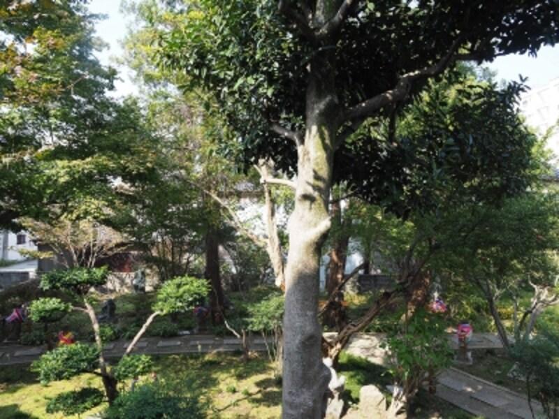庭園@香林寺