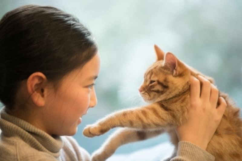 猫の目を見つめてはいけないって本当?