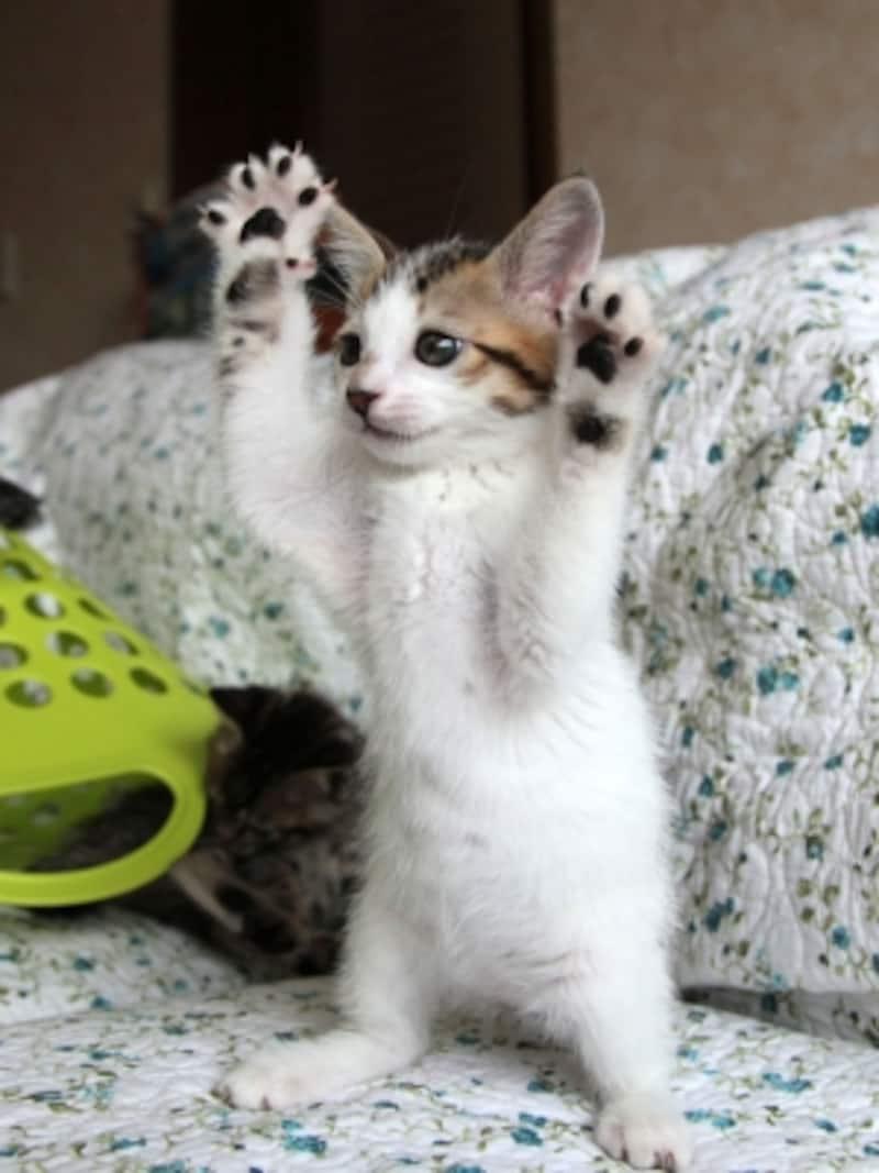 がおーーー!