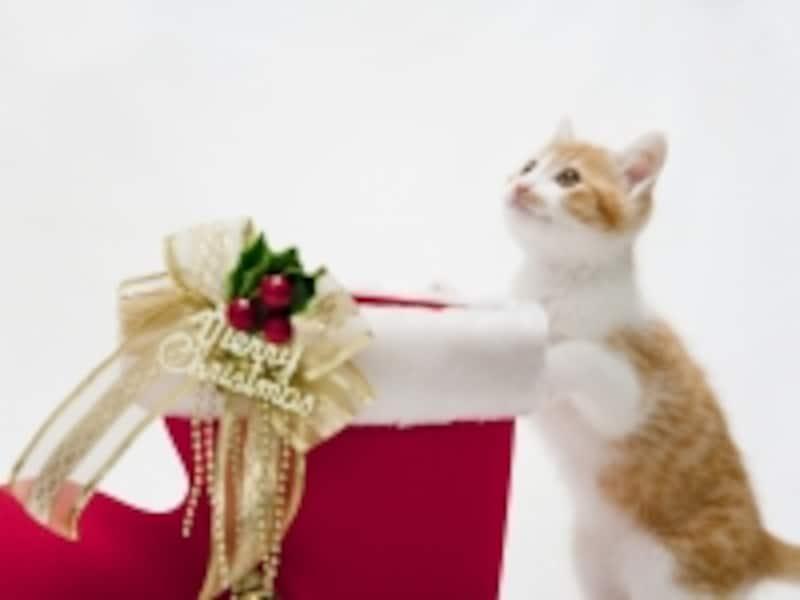 クリスマスを1人で過ごすのは寂しい?