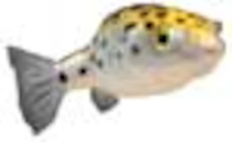 汽水魚・その他