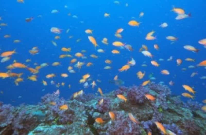 ダイビング,潜水時間