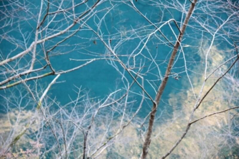 冬枯れの木々とのコントラストが美しい