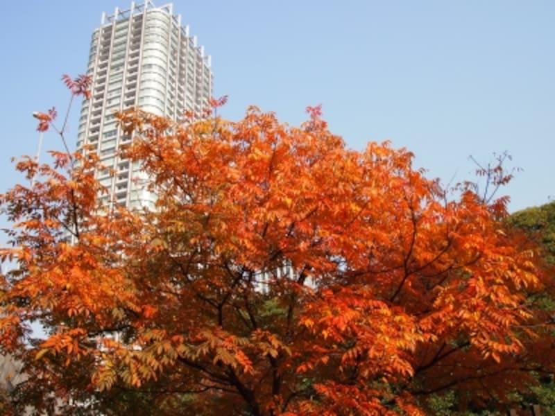 ビルと紅葉が重なり合っている素敵な景色
