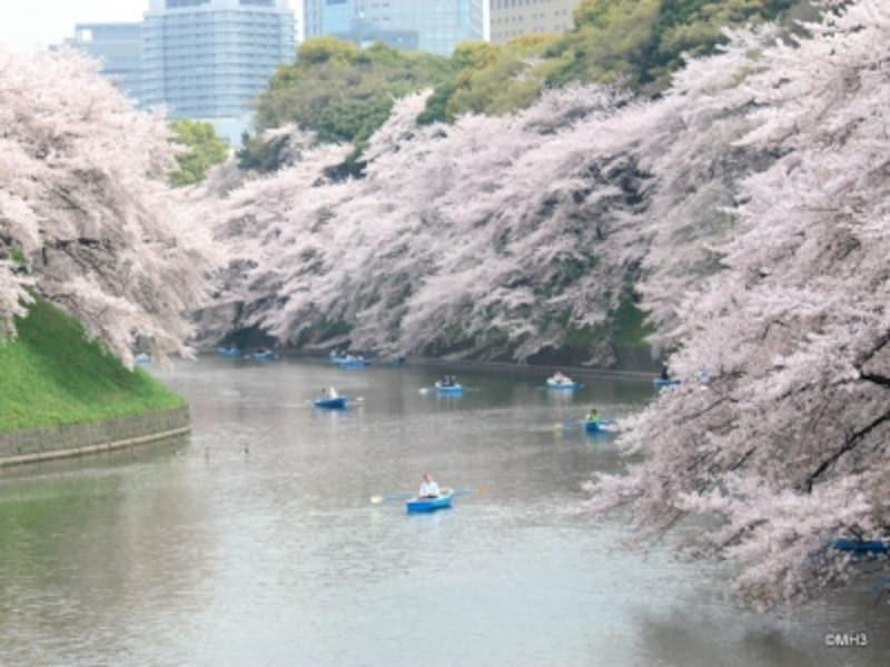 春の千鳥ヶ淵(2011年4月撮影)