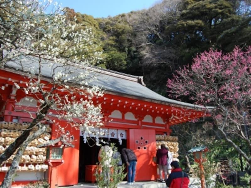 紅白の梅が咲く荏柄天神社