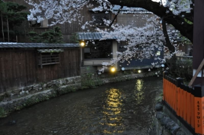 白川の流れと桜(祇園)