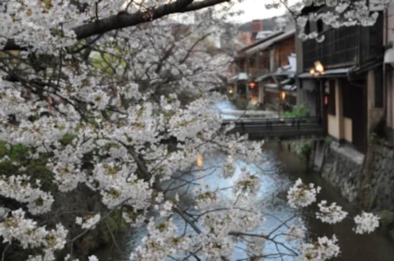 満開の桜が夜風に花を散らせる