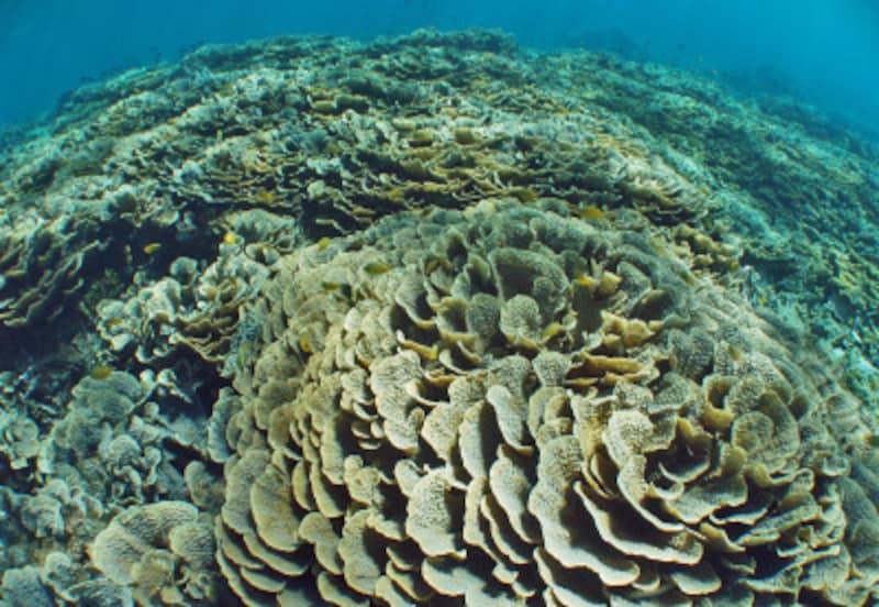 スキューバ,ダイビング,地球温暖化,サンゴ,白化,海水温,海面上昇,海水酸性化,IPCC,第5次評価報告書,COP21,パリ協定,