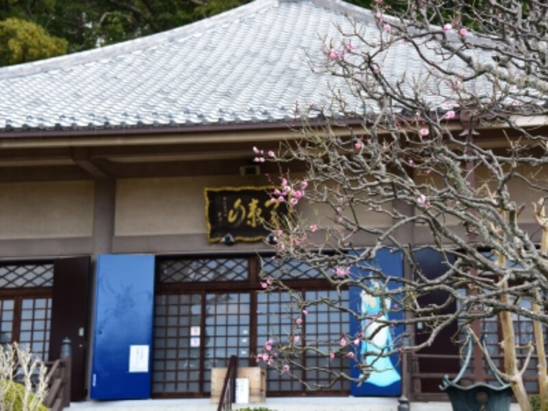 早春、多門院本堂前に咲く紅梅