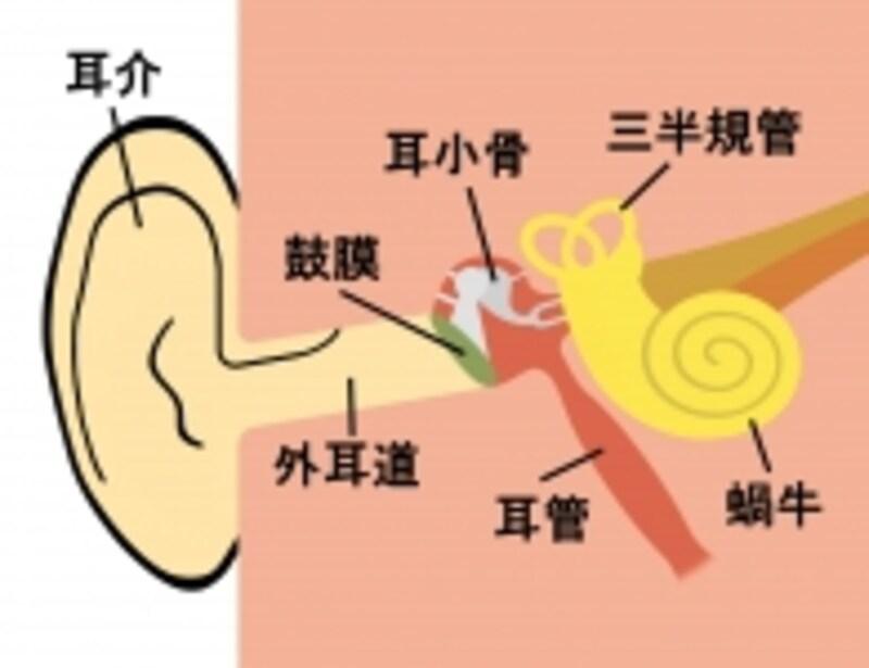 耳のメカニズム