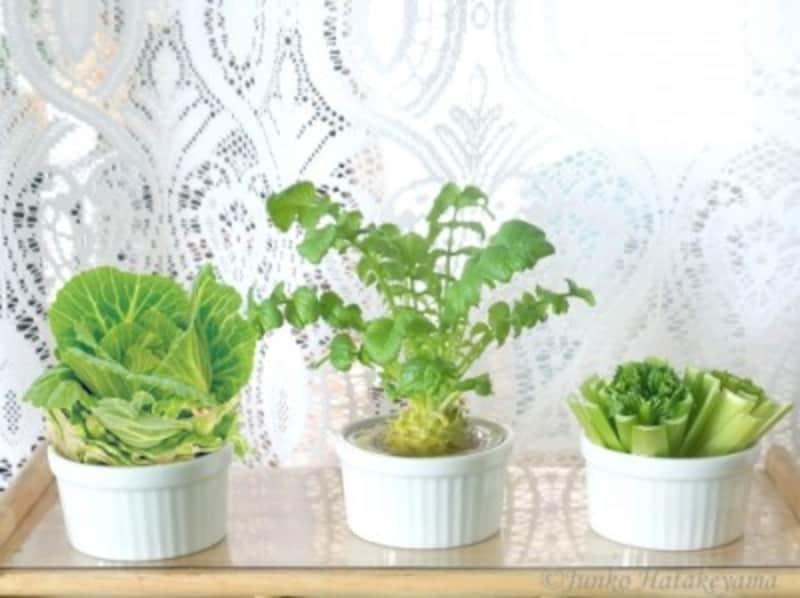 キッチンがリサイクル野菜でミニ菜園に!