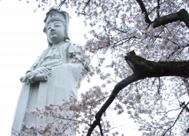 観音山の桜