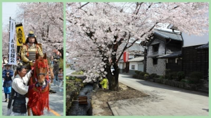 写真左:イベントでの武者行列、写真右:雄川堰周辺の桜