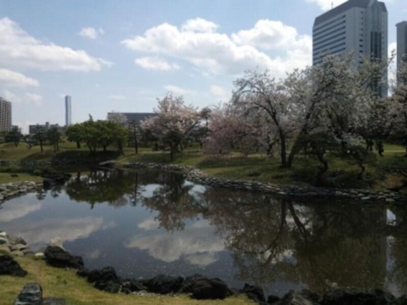 浜離宮恩賜庭園の桜(3)