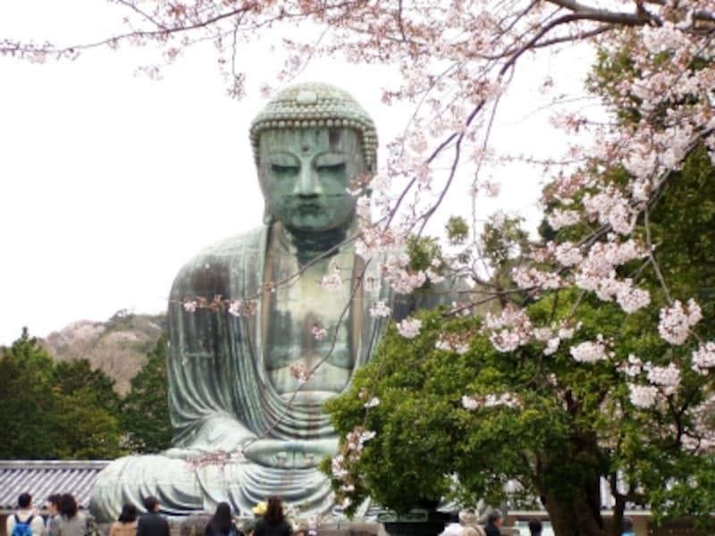 大仏像とサクラ