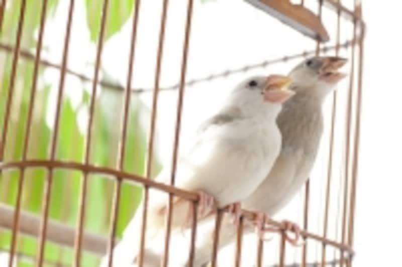 小鳥を会社から見たり鳴き声を聞くこともできる。