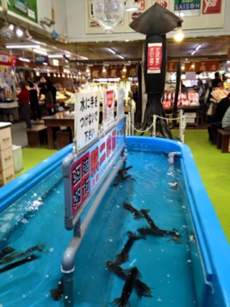 函館朝市にあるイカの釣り堀。その奥には巨大イカオブジェが鎮座しています。
