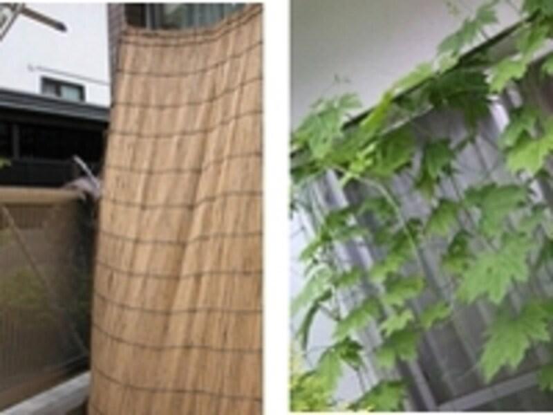 直射日光の入り込みを防ぐ、よしずとグリーンカーテン。