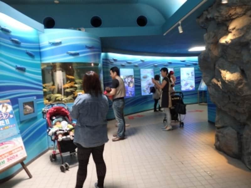荒川に生きる生物が勢揃いするさいたま水族館