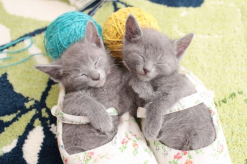 2匹並んで眠る子猫も幸せそう