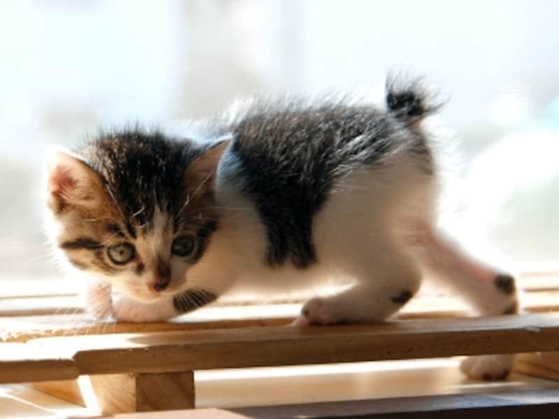 猫は心を持つ動物です。