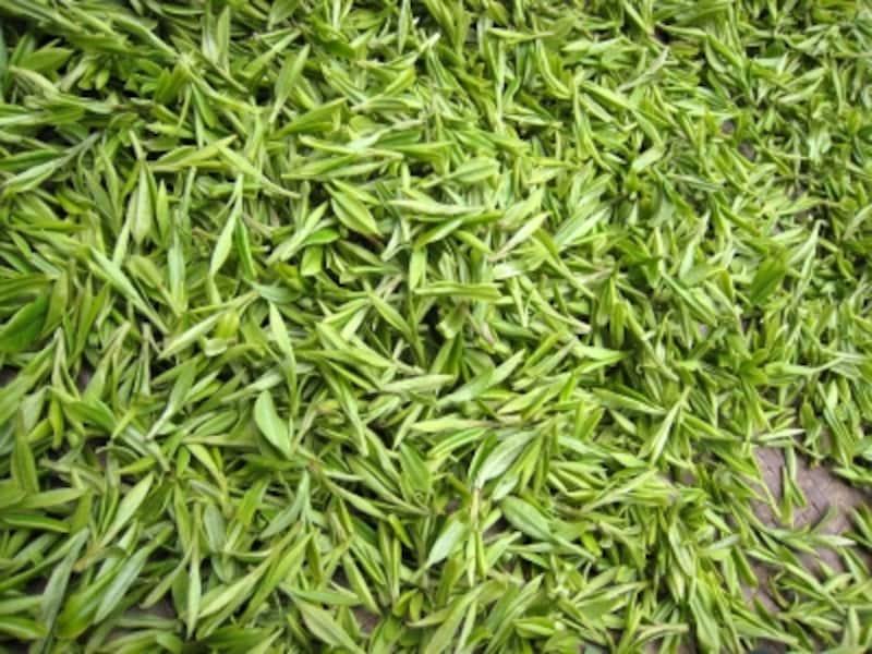 龍井茶新芽