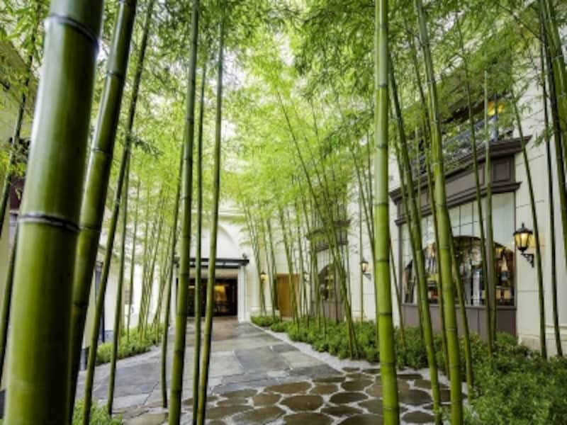 鮫島社長の自宅にあるエントランスの竹は実際に存在しますが、リビングやキッチンなどの部屋はセットだそうです(画像提供:横浜迎賓館)