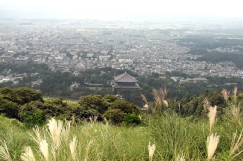 大仏殿が小さく見えます
