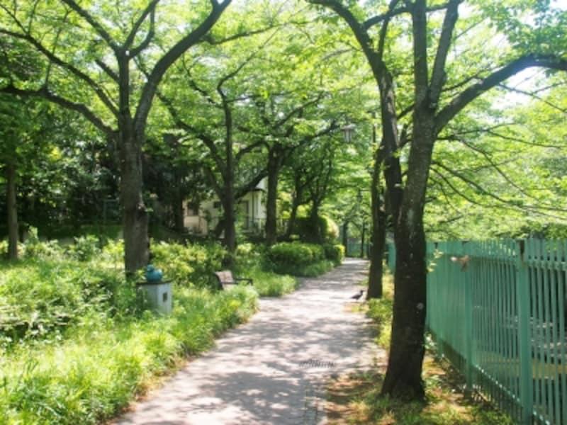 桜が咲く季節の散歩もいいだろうね