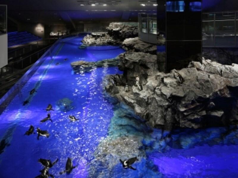 すみだ水族館「ペンギン」ゾーン