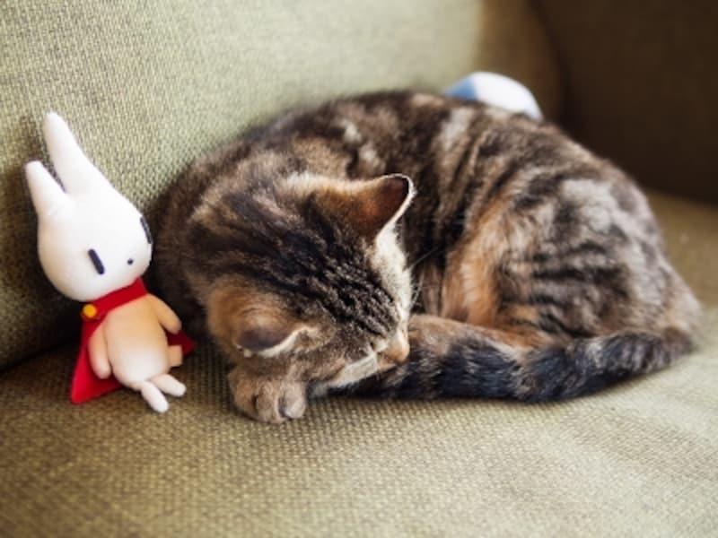 この白いウサギが「ふわり」。眠る看板猫とともに。