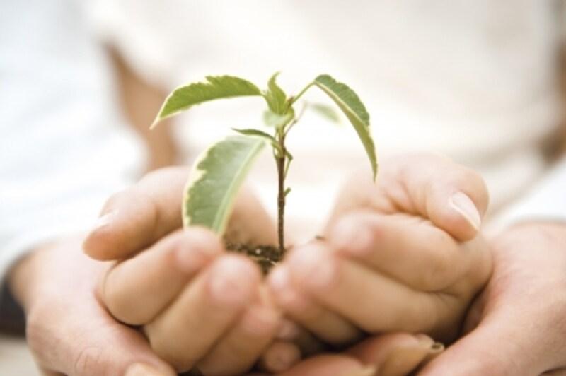 優しさの芽が、いい男を育てる芽