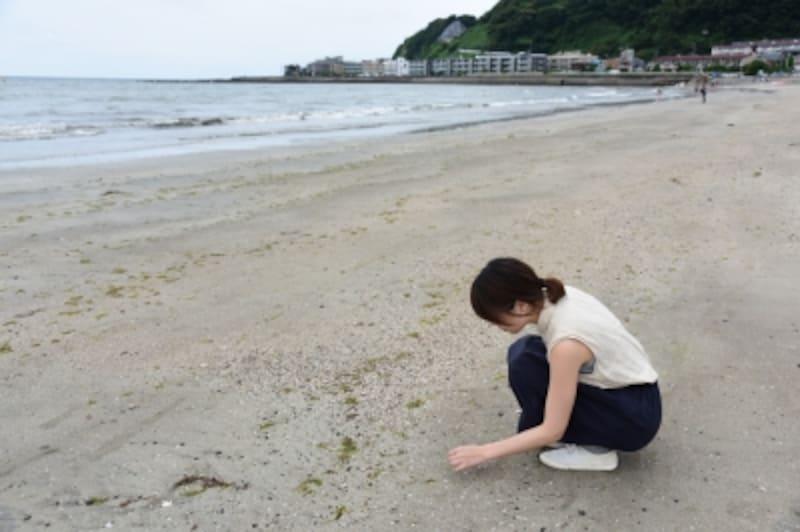 由比ヶ浜の海岸では、きれいな貝殻が見つかりました