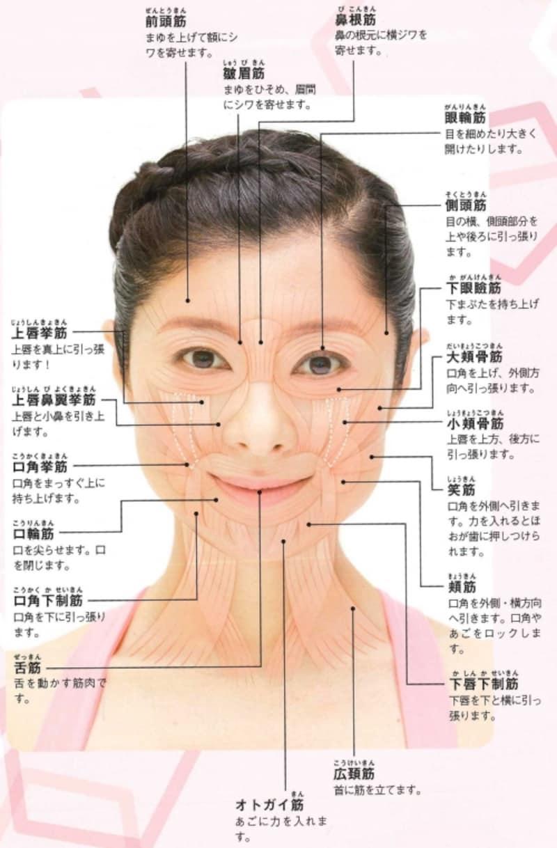 気になる悩みを解消するために、どの顔筋を鍛える?