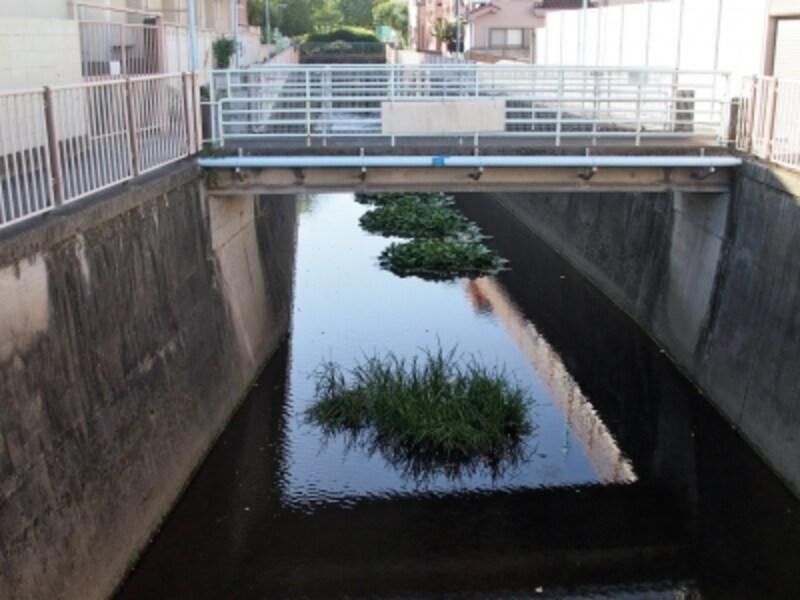 善福寺池が善福寺川の源流となる