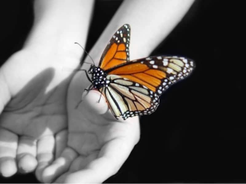 恋愛感情のない昆虫が不倫をしていたら、やはり生き物の本能なのだろうか?