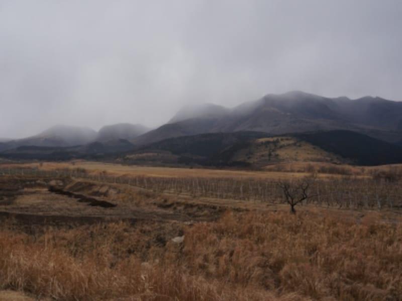 久住ワイナリー。1月の画像なので少し寂しいですが、本当に高くて涼しい立地にあります