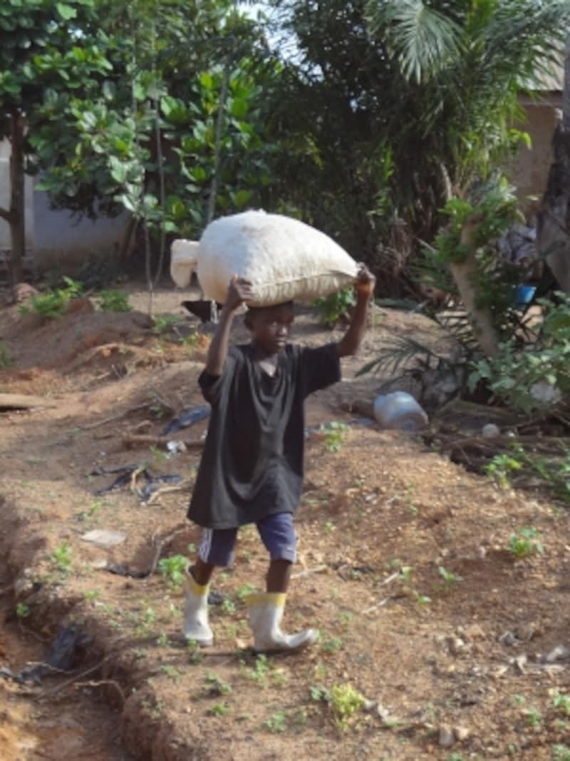 重いカカオ豆の袋を運ぶ子どもundefined「写真提供:ACE」画像提供