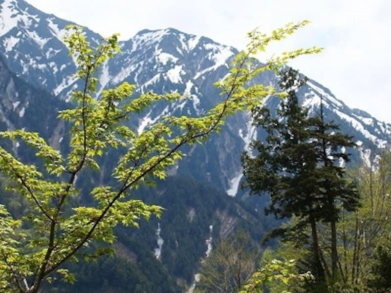 旅をしたのは6月上旬。北アルプスは芽吹きの季節を迎えていました