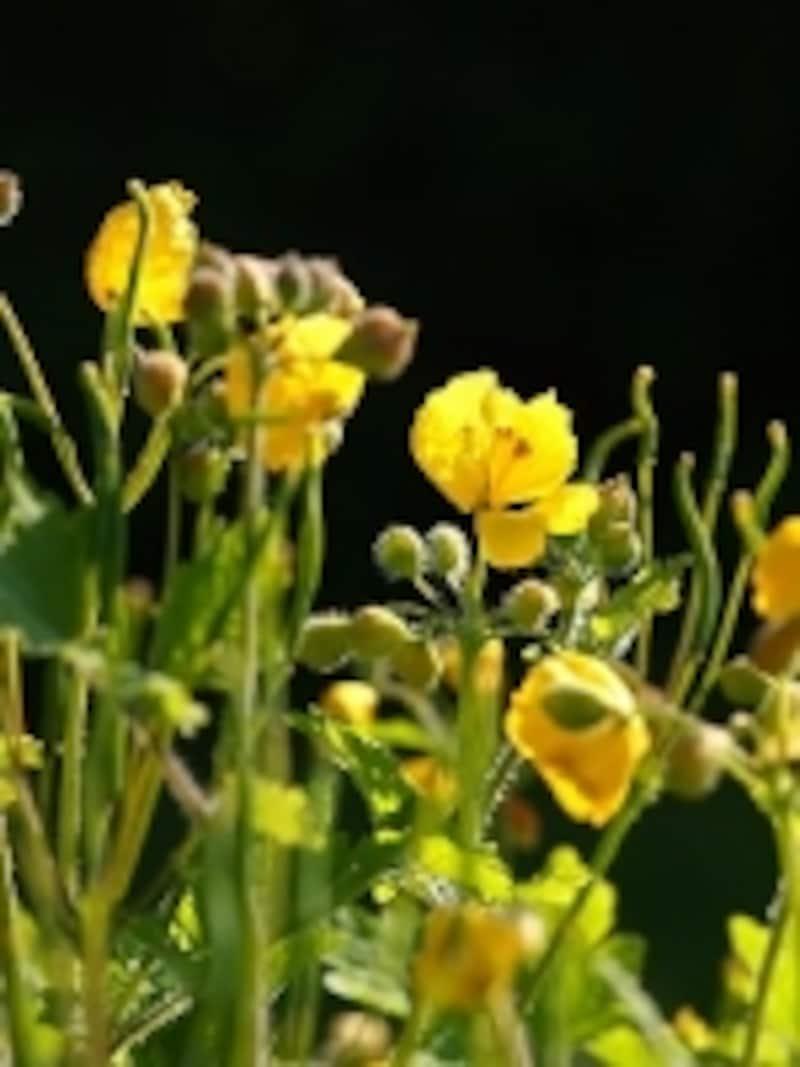 信州では、道端の雑草もこんなに可憐で美しい