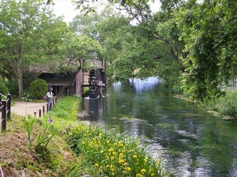 安曇野を代表する風景、大王わさび農園内の水車小屋