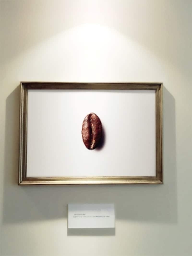 ポワントゥは「尖った」の意味。このコーヒー豆の独特の形状から名付けられた。