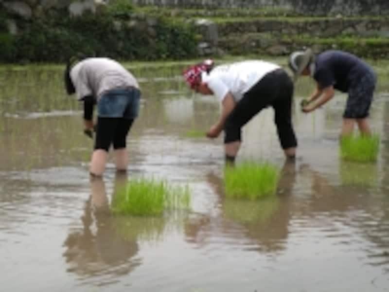田舎暮らしの体験がオススメ