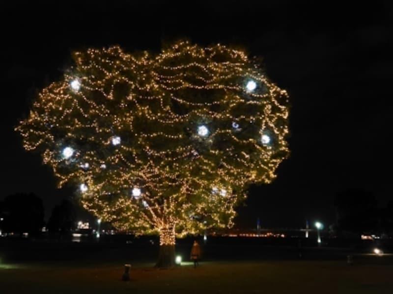 超穴場!?undefined臨港パーク芝生広場に光のイルミネーションボールをまとったツリーが(2016年11月18日撮影)