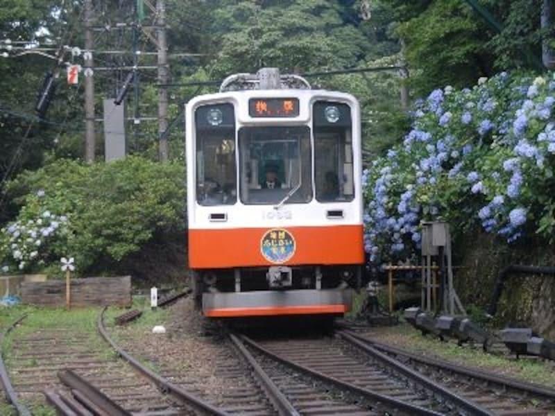 あじさいに迎えられて宮ノ下駅に到着した強羅行き電車