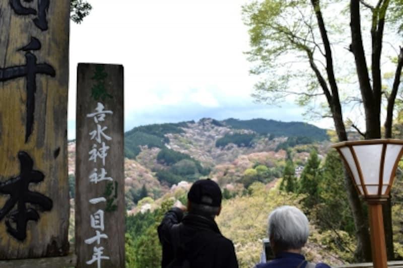 吉水神社境内の「一目千本」
