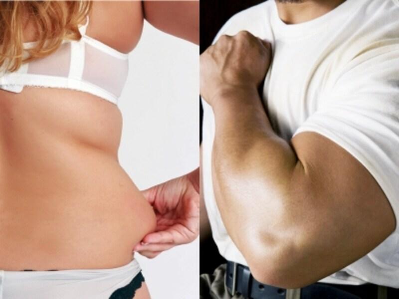 体型や太り方と、ダイエット方法の関係は?